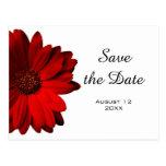 Red Gerbera Daisy Save the Date Postcard Postcard