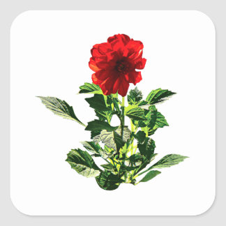 Red Gerbera Daisy Square Sticker