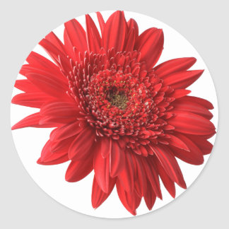 Red Gerbera Daisy Stickers