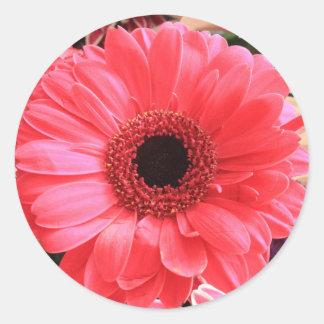 Red Gerbera Daisy Round Stickers