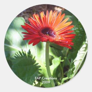 Red Gerbera Daisy sticker