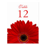 Red Gerbera Daisy Table Number Card Flat