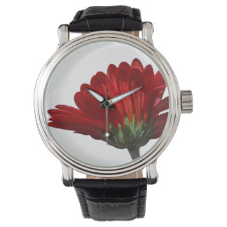 Red Gerbera Daisy Watch