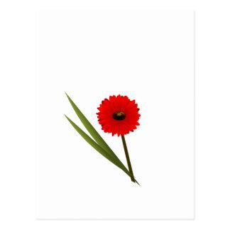 Red Gerbera Flower Clipart Postcard
