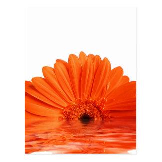 red gerbera postcard