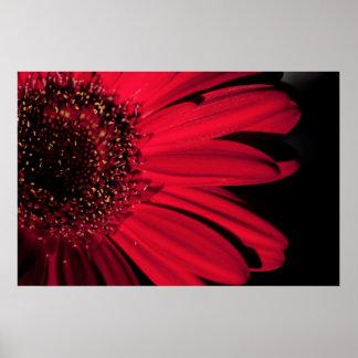 Red Gerbera - Poster