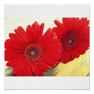 Red Gerberas Canvas Print