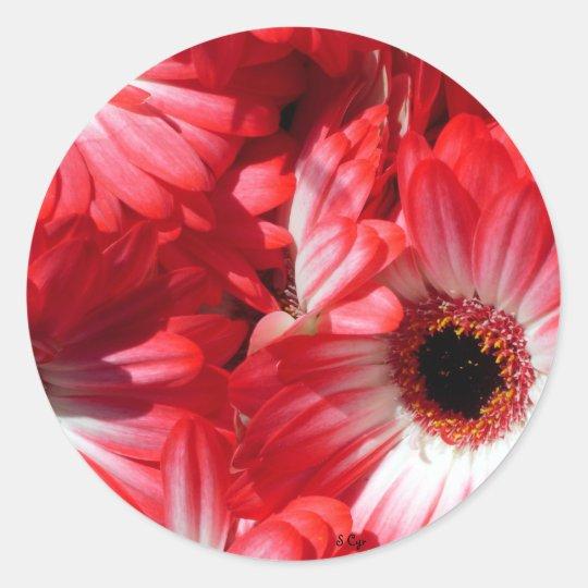 Red Gerberas Classic Round Sticker