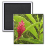 Red Ginger Flower I Magnet