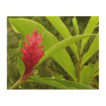 Red Ginger Flower I Tropical Nature Wood Wall Art