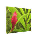 Red Ginger Flower Stretched Canvas Print