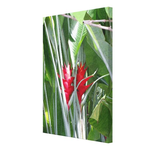 Red Ginger Gallery Wrapped Canvas