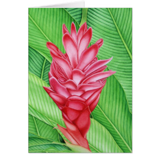 Red Ginger Watercolour Greeting Card
