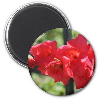 Red Gladiola  Magnet