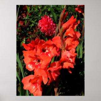 Red Gladiolas Print