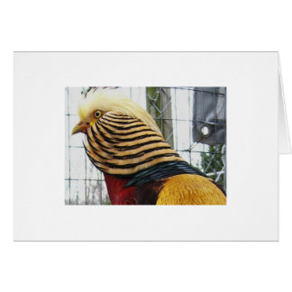 Red Golden Pheasant Head Card