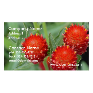 Red Gomphrena Flowers Business Card Template