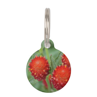 Red Gomphrena Flowers Pet Name Tags