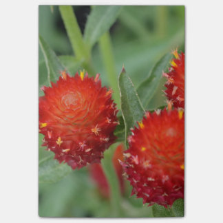Red Gomphrena Flowers Post-it® Notes