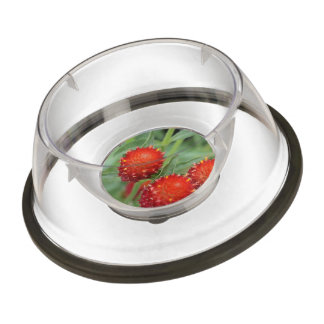 Red Gomphrena Flowers Pet Bowl