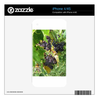 Red grapes in a vineyard decal for iPhone 4