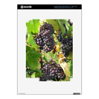Red grapes in a vineyard iPad 3 decal