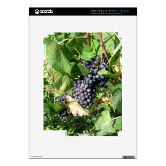 Red grapes in a vineyard iPad 3 skins