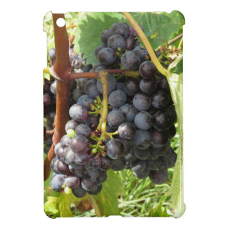 Red grapes in a vineyard iPad mini case