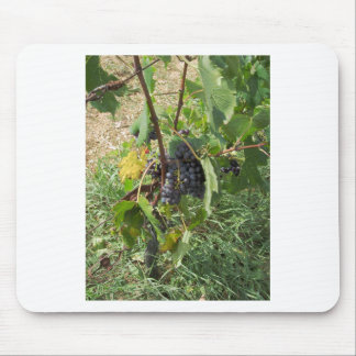 Red grapes in a vineyard mouse pad