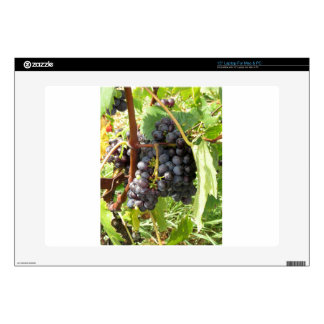 Red grapes in a vineyard decal for laptop