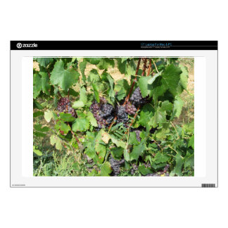 Red grapes in a vineyard skin for laptop