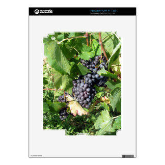 Red grapes in a vineyard skin for iPad 2