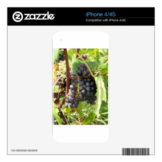 Red grapes in a vineyard skins for iPhone 4