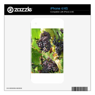 Red grapes in a vineyard skins for the iPhone 4S