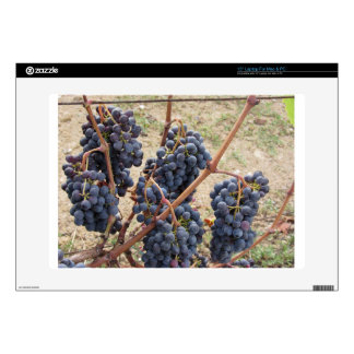 """Red grapes on the vine . Tuscany, Italy 15"""" Laptop Decal"""