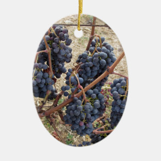 Red grapes on the vine . Tuscany, Italy Ceramic Ornament