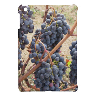 Red grapes on the vine . Tuscany, Italy Cover For The iPad Mini