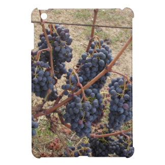 Red grapes on the vine . Tuscany, Italy iPad Mini Cases