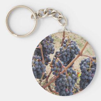 Red grapes on the vine . Tuscany, Italy Keychain