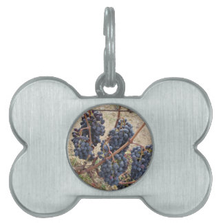 Red grapes on the vine . Tuscany, Italy Pet Name Tag