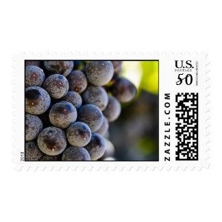 Red Grapes on the Vine used to make wine Postage