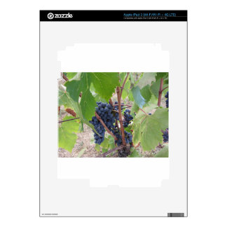 Red grapes on the vine with green leaves decal for iPad 3