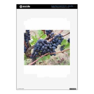 Red grapes on the vine with green leaves iPad 3 decal