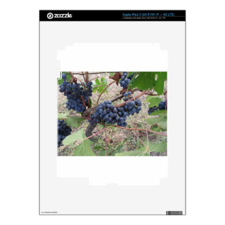 Red grapes on the vine with green leaves iPad 3 decals