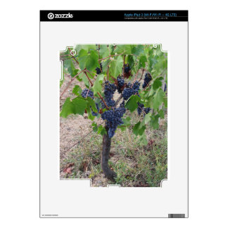 Red grapes on the vine with green leaves iPad 3 skins