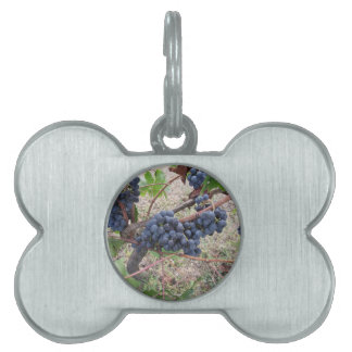 Red grapes on the vine with green leaves pet tag