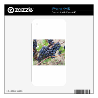 Red grapes on the vine with green leaves skins for iPhone 4S