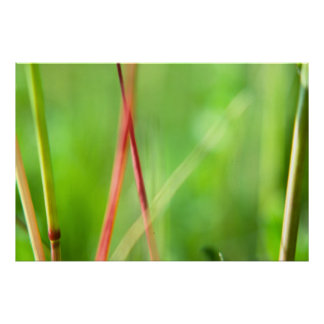 Red Grass Poster