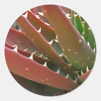 Red-Green Aloe 4 Classic Round Sticker