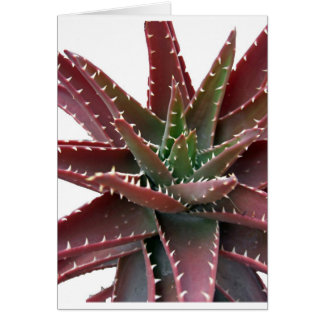 Red-Green Aloe 6 Cards